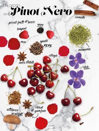 Gli aromi del Pinot Nero