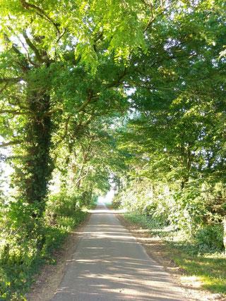 Wunderschöne Allee in Niedersachsen