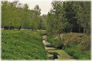 Junges Grün rund um den Rodebach