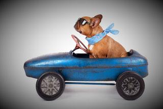 Ein Hund mit einem Halstuch sitzt in einem Auto
