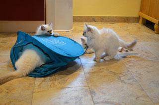 Dieses wunderbare Zelt, da passen wir bestimmt alle hinein!