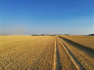 Agrarimmobilien kaufen