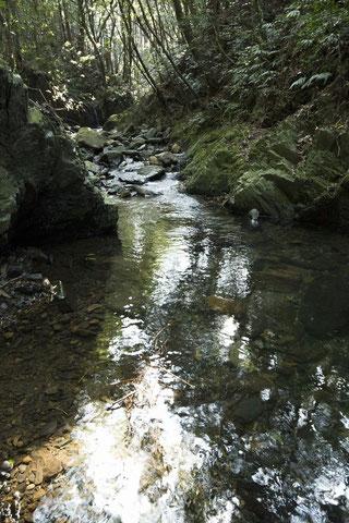 ほたるが飛び交う渓流