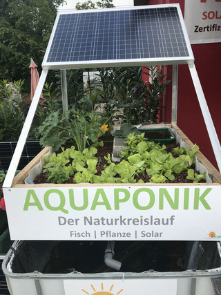 Aquaponik Pilotsystem bei iKratos in Weißenohe