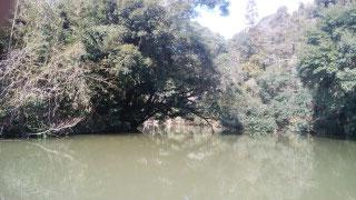 カモ猟が出来る場所は限られます。ここは天竜川ではありません。