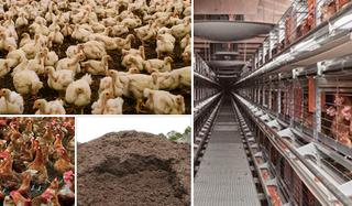 gallinaza pollinaza, producción de biogás