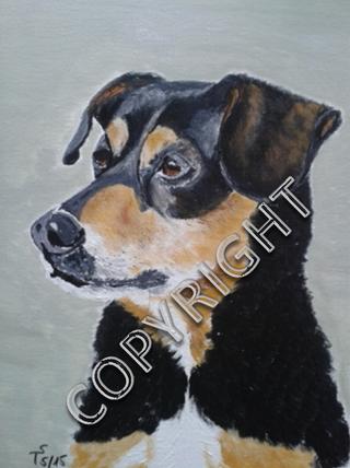 Hundeporträt, Acryl auf Leinwand, 30x40 cm. Kleiner Mischlingshund: hauptsächlich schwarzes Fell mit beigen und weißen Stellen an der Schnauze und an der Brust. Brustporträt. Hund seitlich dargestellt und schaut nach rechts.