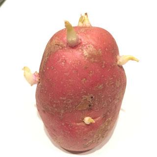 nypoteter oppskrifter israelske poteter fløtegratinerte bakte
