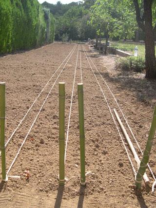 plantation safran bio