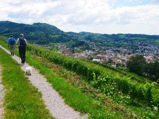 Weit über Kappelrodek im mittl. Schwarzwald