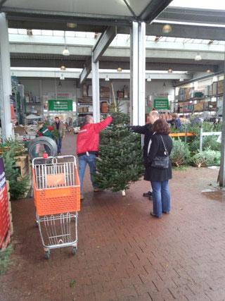 クリスマスツリー用モミの木