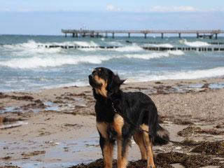Leon am Strand