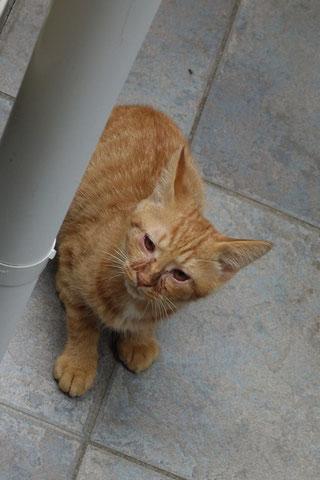 ネコトヒト;猫と人,nekotohito,ネコトヒト