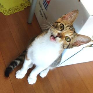 こひめ;猫と人,nekotohito,ネコトヒト