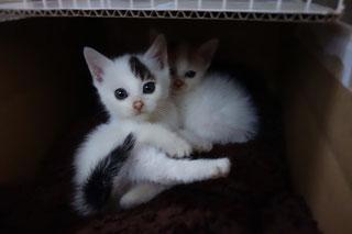 あこみこ興味しんしん;猫と人,nekotohito,ネコトヒト