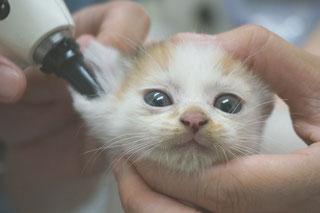 猫みこ(現みお)診療中の画像;猫と人,nekotohito,ネコトヒト