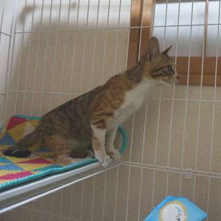 こ姫ケージの中2;猫と人,nekotohito,ネコトヒト