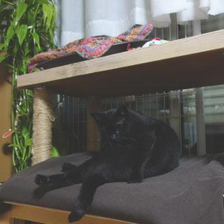 猫ののこ画像;猫と人,nekotohito,ネコトヒト