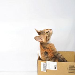 猫こひめ保護した時の画像6;猫と人,nekotohito,ネコトヒト