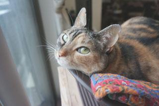 猫しじみを紹介する時の画像;猫と人,nekotohito,ネコトヒト