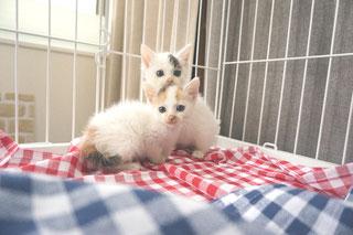猫あこみこ(現まおみお)の画像:猫と人,nekotohito,ネコトヒト