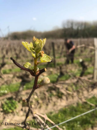 wineter-pruning-Loire-Valley-vineyard-workshop-wine-activity-wine-tours-wine-tastings-local-guide-Myriam