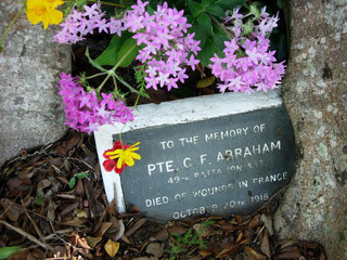Abraham memorial tree in Eumundi