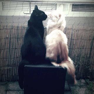 Zwei Katzen - Tiergespräche