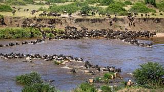 Parchi e Riserve del Kenya - Mara Crossing