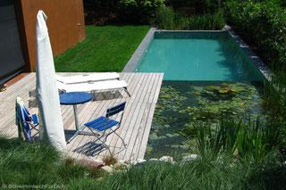 Naturpool im Garten, integriertes Holzdeck, Schwimmzone und Filterbereich abgetrennt. Haus links im Bild. unten links Holzdeck mit Gartenmöbeln. Naturpool rechts im Bild. Wasser hellblau