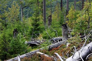Pauschale Wilder Wald