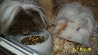 Ottobert und Beate