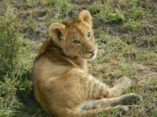 Safarianbieter für Kenia