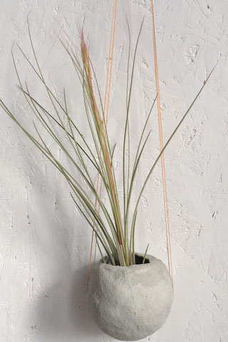 Juncea Air Plant in its early stages of blooming by PASiNGA
