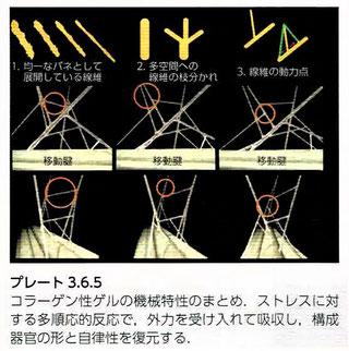 コラーゲン性ゲルの機械特性