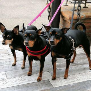 Собаки в Риме фото