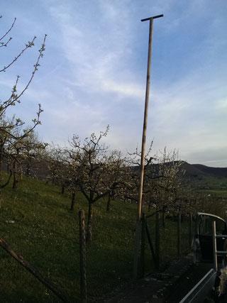 Greifvogelstange zwischen Streuobstbäumen. Foto: NABU Metzingen /  Horst Lang