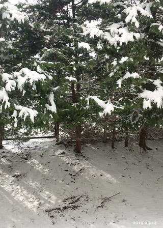 3月24日ベランダのからの雪景色