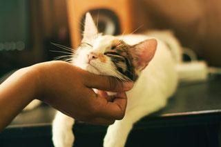 Klopf-Akupressur wirkt auch auf Tiere (hier: eine Katze) positiv