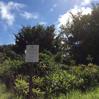 SDGs 森林再生プログラム