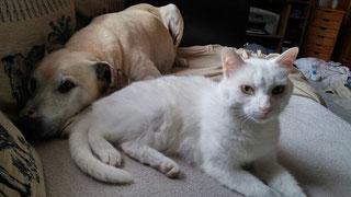 Sammy und Rocky; Foto Cremer