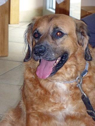 Bruno, ein Tiertafel-Schützling