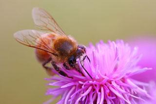 Blüten als wichtige Nahrungsquelle für Insekten