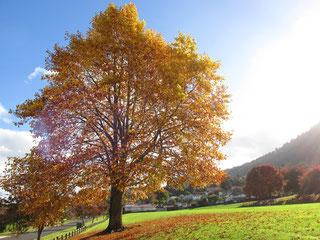 ターナー公園の紅葉