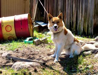 aufmerksam registrieren Hunde alles Fremde