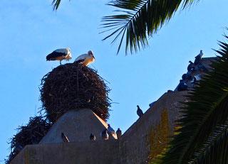Glücksbringende Störche auf dem Dach