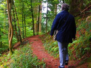 ein Mischwald aus Tannen, Buchen und Eichen