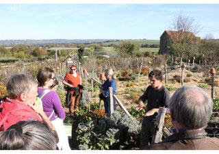 Visite guidée du jardin en permaculture