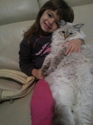 gatto siberiano seal silver tabby pointgatti siberiani, allevamento, gatti, cuccioli, siberiani, siberiano,