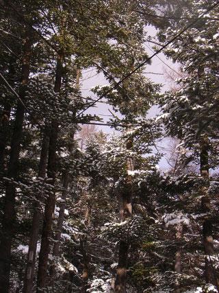 雪の軽井沢からお届けいたします!!!!!